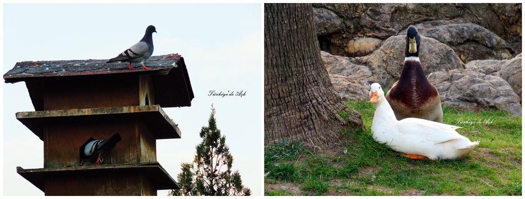 Doğal Park  (24).jpg