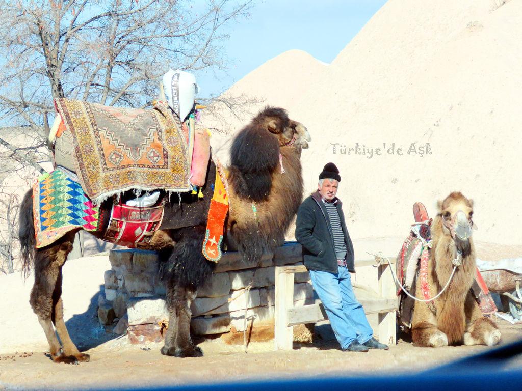 卡帕多奇亞的觀光駱駝