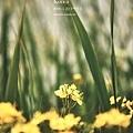 《第七屆野花電影獎》海報1.jpg