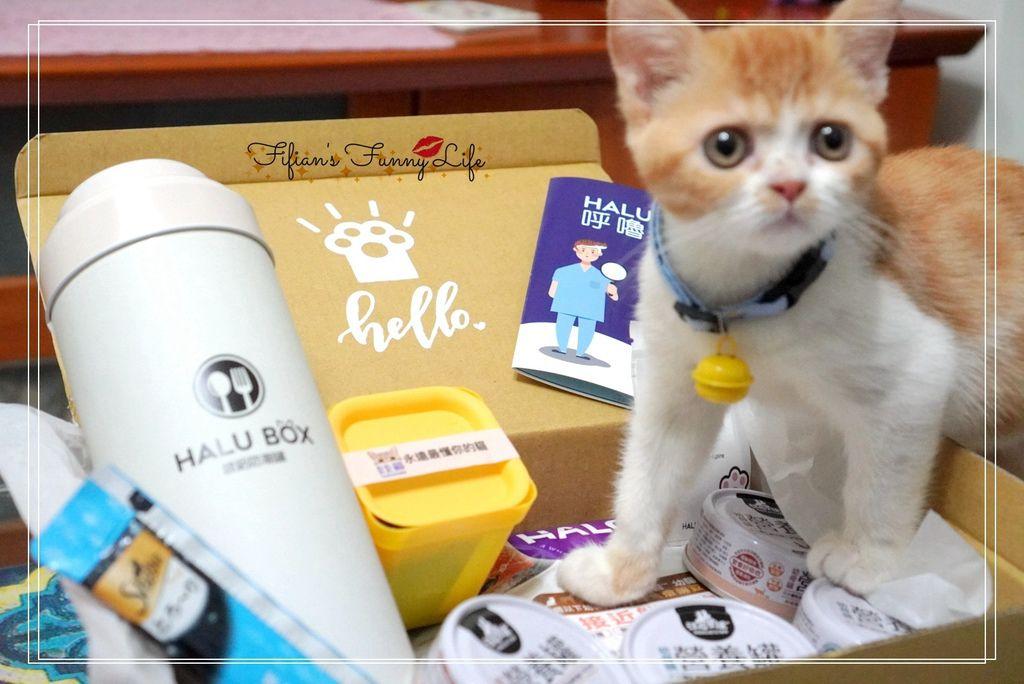 卡卡貓CatcatMed 客製化貓盒