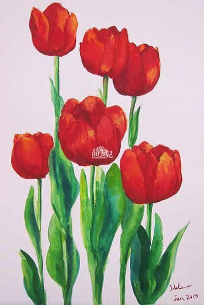 盛開的紅色鬱金香