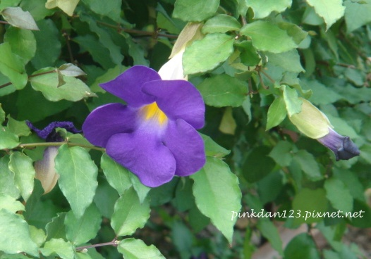 紫.JPG