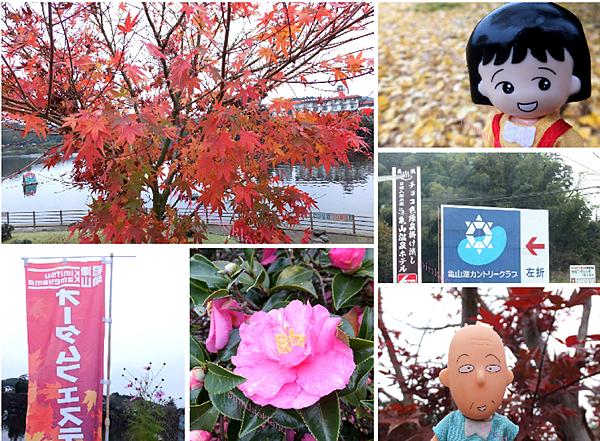 【日本千葉】2015十一月秋末賞楓 D11 龜山湖 (君津市)