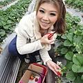 採草莓~好happy