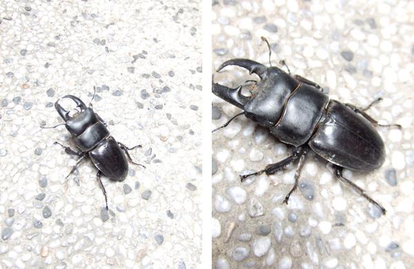 甲蟲.jpg