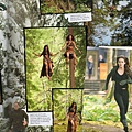 The Twilight Saga The Complete Film Archive (21)