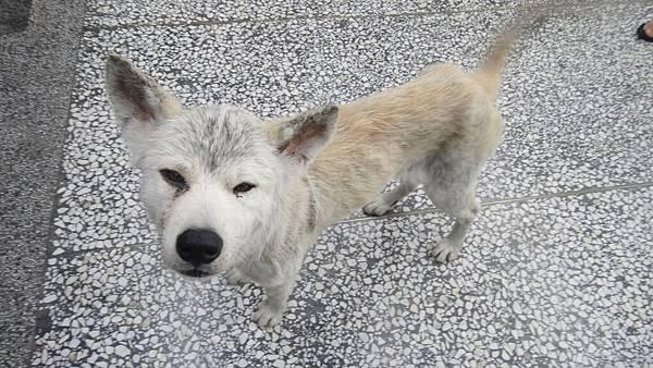 我家附近的7-11,這隻狗常出沒! 他一直想鑽到我裙子底下 冏