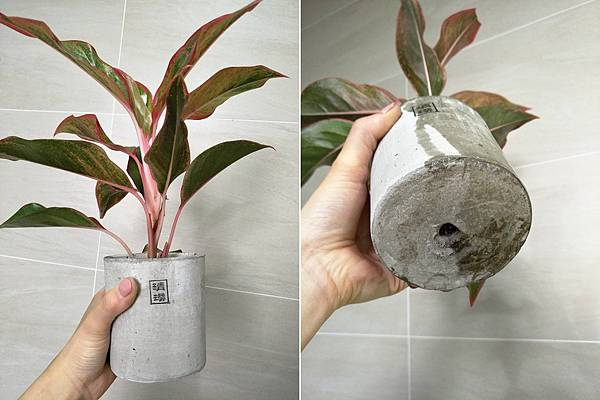 清璞文創新生活 清璞 植物 療育植物 盆栽 甲醛 空氣清淨