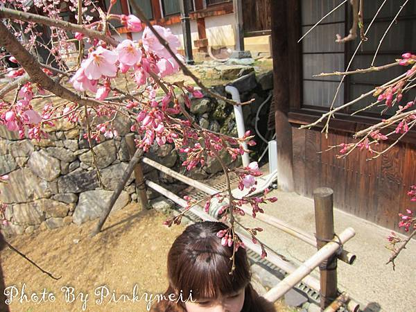 春日大社-21