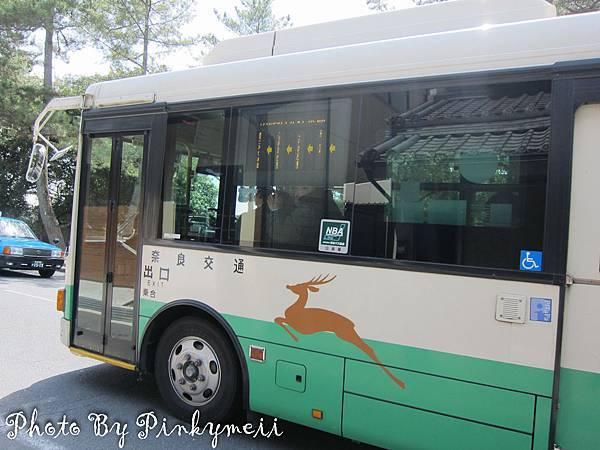 奈良斑鳩-16