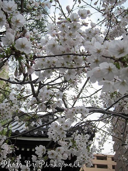 京都-12