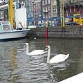 荷蘭五.JPG