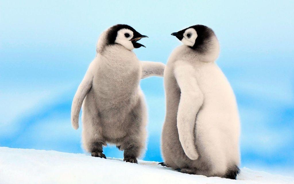 yavru_penguenler