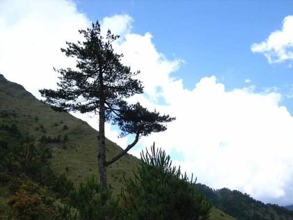 20070728八通關前山28.jpg