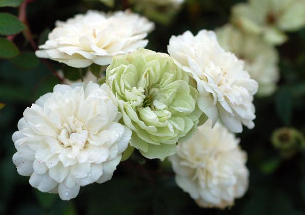 舅媽種的花