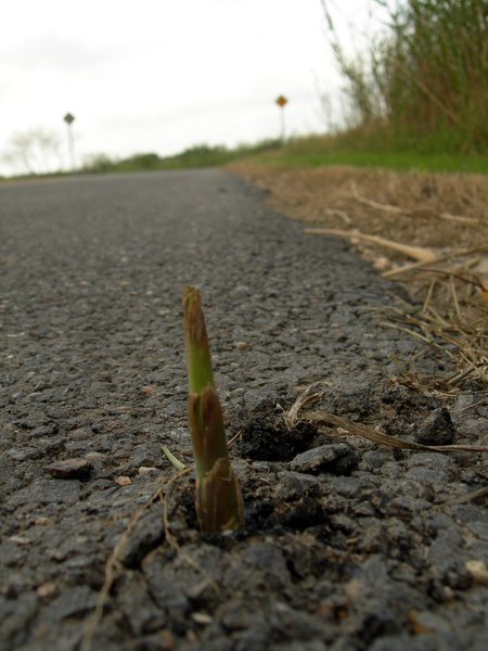 生命力(照片由Machel提供)