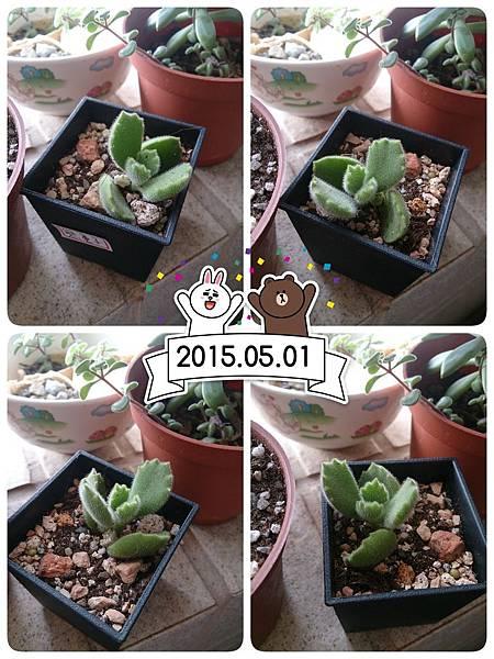 2015-05-02-09-37-10_deco.jpg
