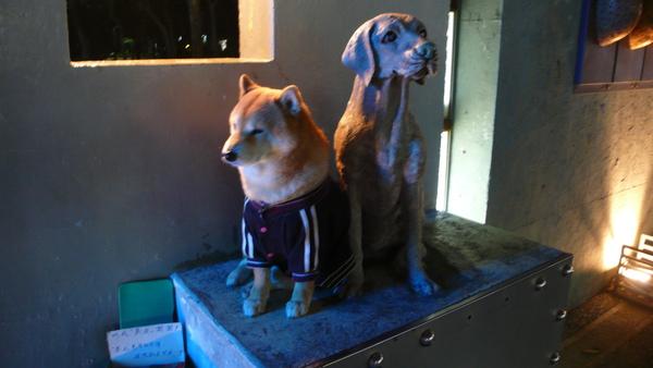 莫尼的柴犬