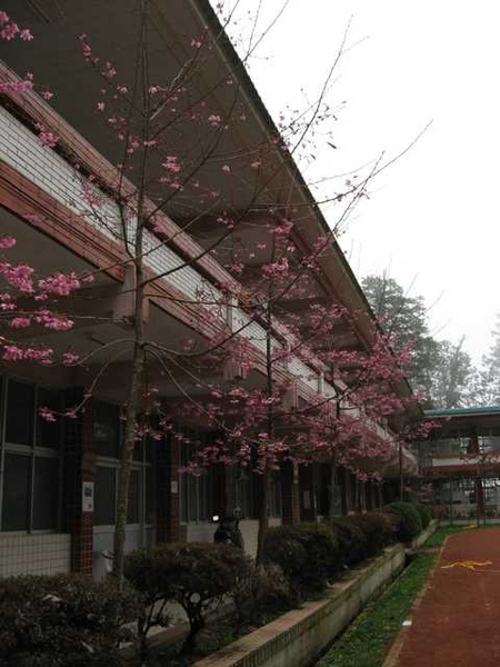 山頂的學校