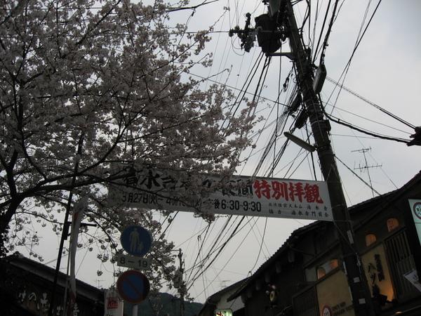 清水寺賞夜櫻