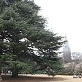 tokyo 1157