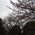 tokyo 1669