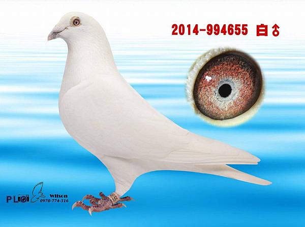 Opera 快照_2018-06-01_193312_www.facebook.com.png