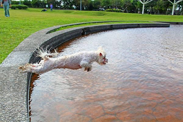 捏捏是最愛跳水游泳的瑪爾濟斯