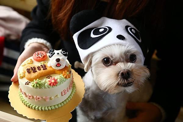 每年生日都要買寵物蛋糕幫捏捏慶生