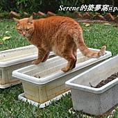 Ginger4-1.jpg