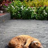 Ginger2_1.jpg