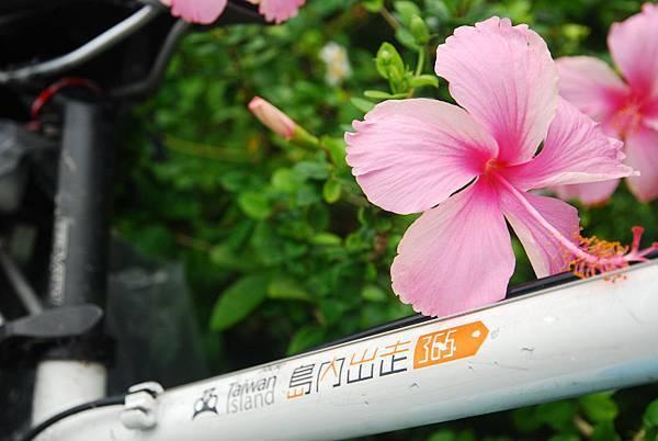 我與蛙單車的環島旅行 By leesheauguang
