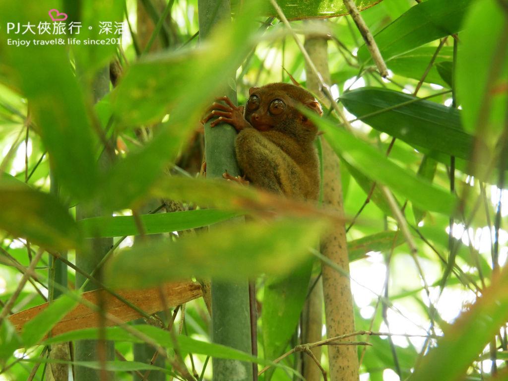 薄荷島一日遊客路行程Klook眼鏡猴