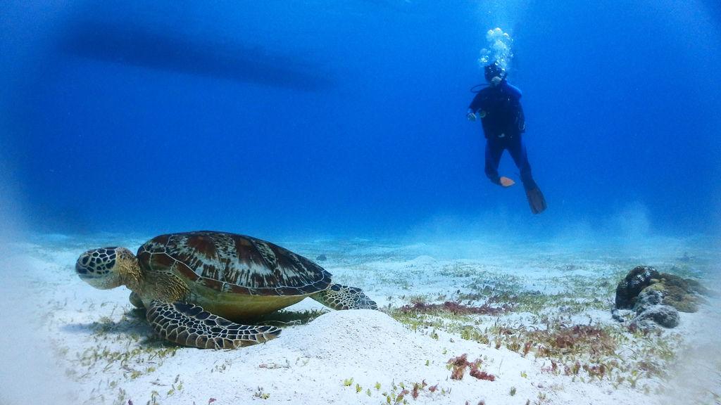 薄荷島巴卡里薩離島保護區潛水海島瘋