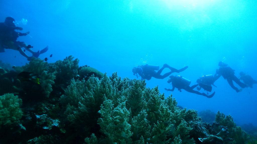 PJ大俠薄荷島巴卡里薩離島保護區潛水海島瘋