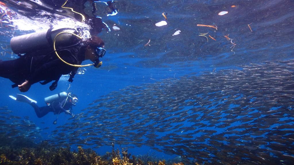 薄荷島沙丁魚風暴必去行程