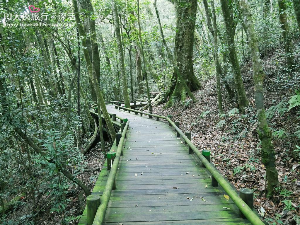 PJ大俠雪見部落之旅山蘇林象鼻吊橋雪見遊憩區林間步道