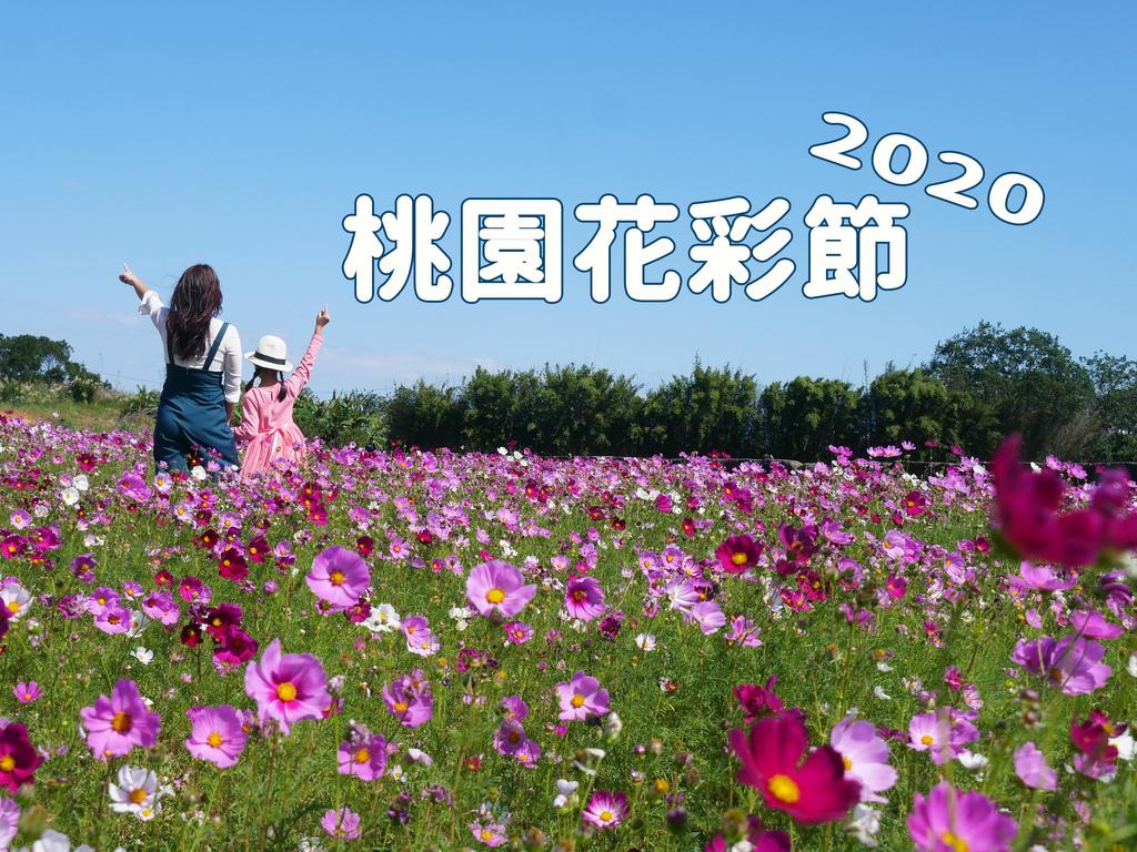 2020桃園花彩節花海花季冬天冬季11月12月桃園花海資訊波斯菊