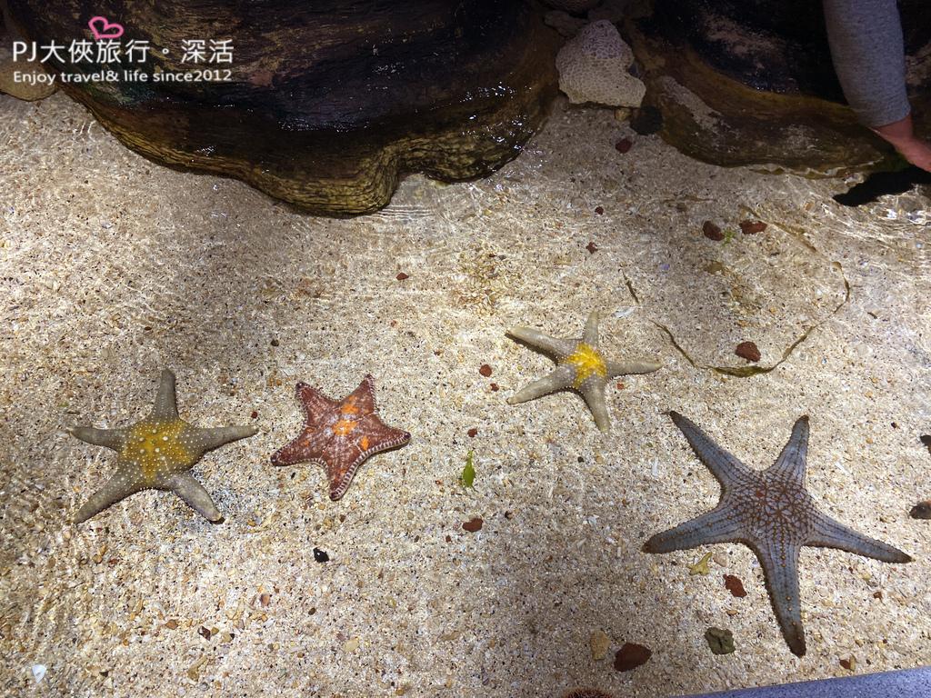 澎湖旅遊新景點2021南北環自由行水族館