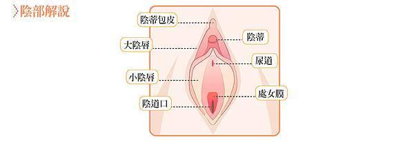 02修陰唇整形手術價格價位價錢費用資訊整理.jpg