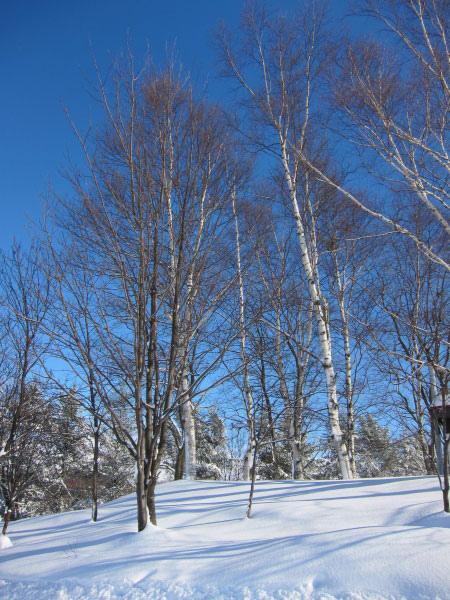 2010北海道-498.jpg