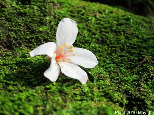 五月桐花吃食-075.jpg