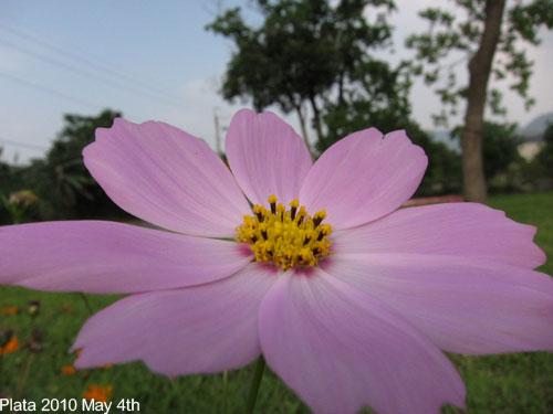 五月桐花吃食-087.jpg