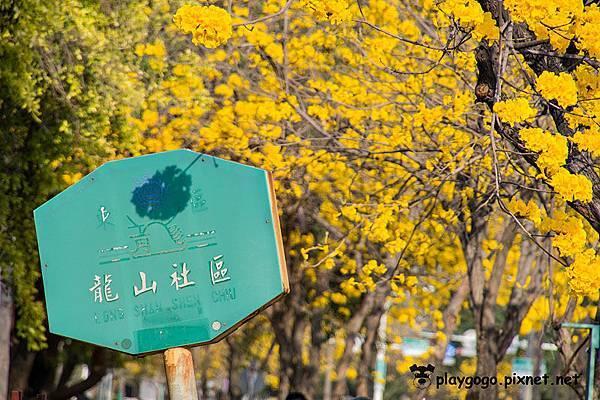台南黃金風鈴木10