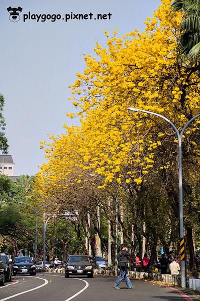 台南黃金風鈴木4