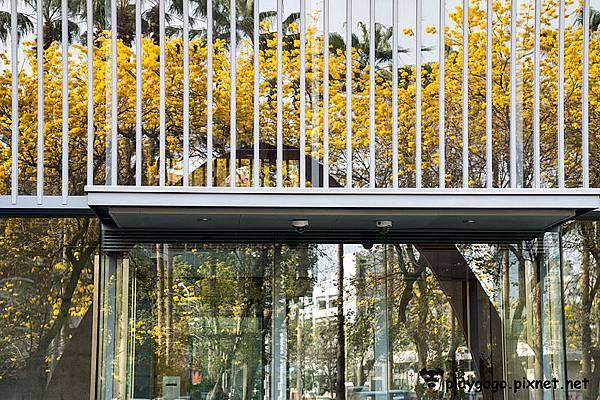 台南黃金風鈴木11