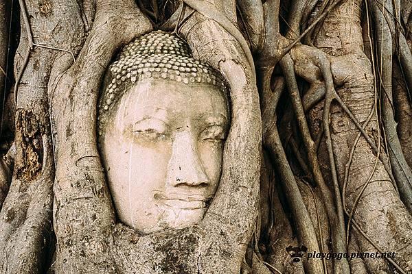 大城 瑪哈泰寺 Wat Maha That (1)
