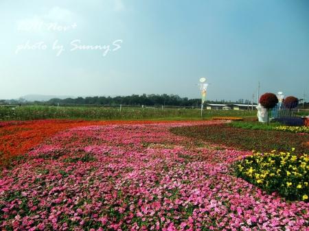 SunnyS-4.jpg