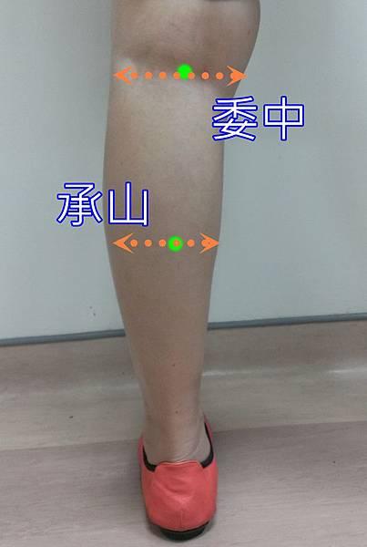 0705委中承山.jpg