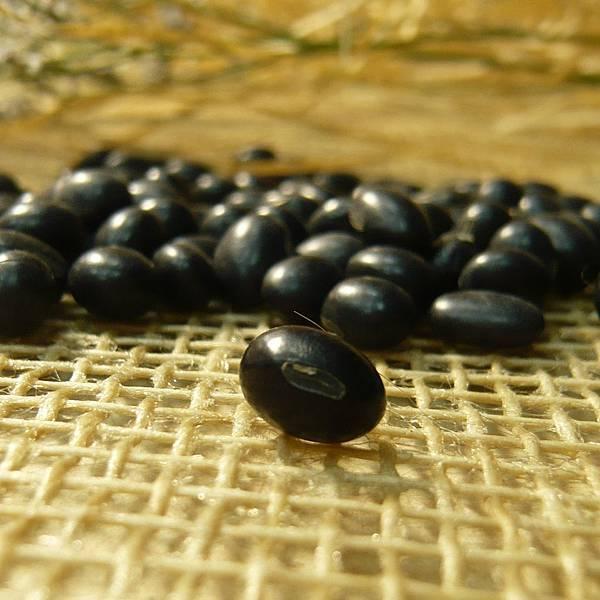 0804黑豆.jpg